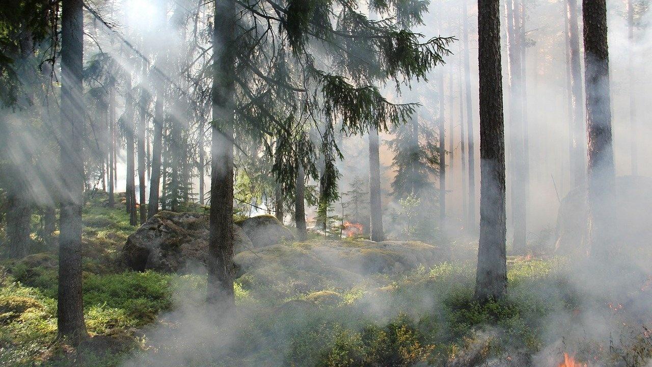 Избухнал е горски пожар край Атина