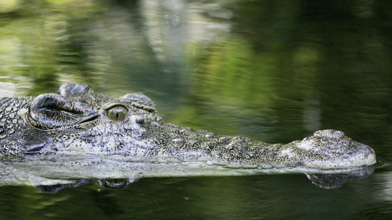 18-годишна реши да поплува посред нощ, към нея се присъедини и 4-метров крокодил