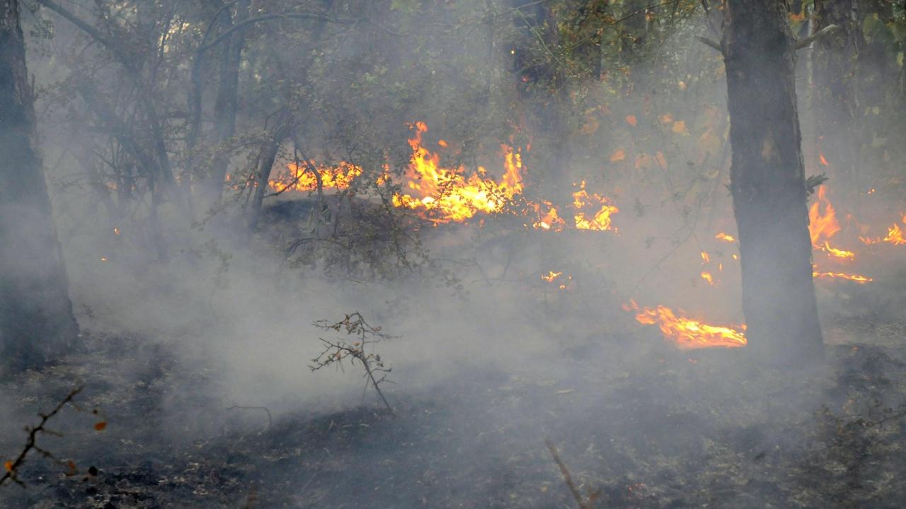 Пожар край Стара Загора