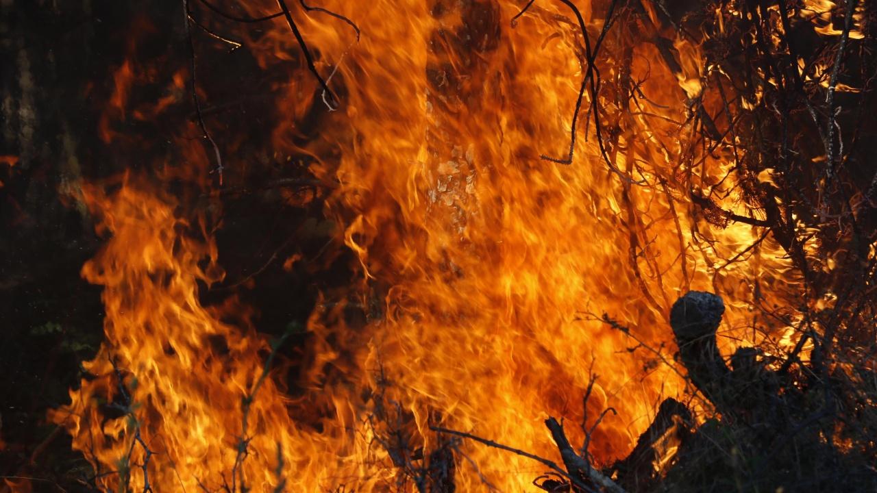 Няма данни за умишлен палеж на гората край Брягово