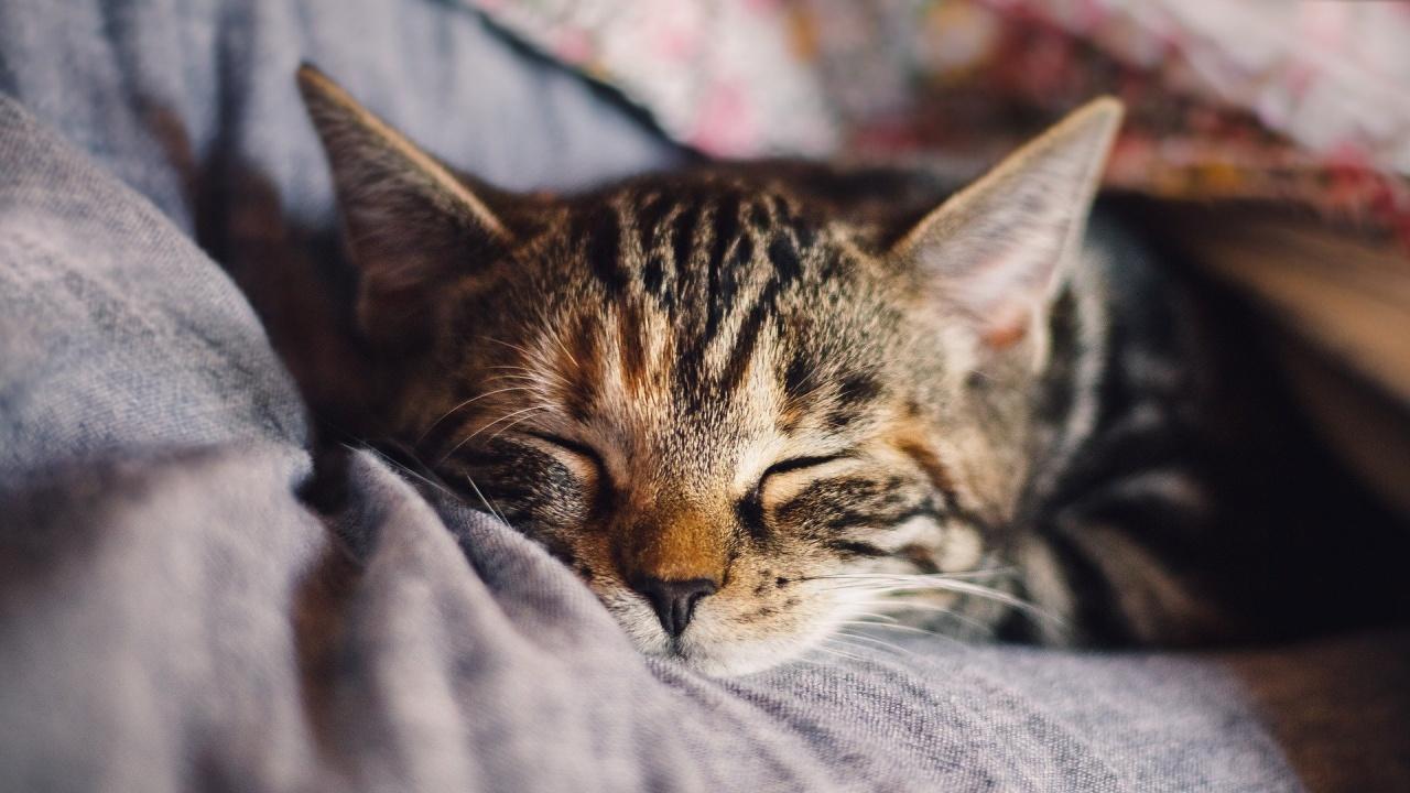Учени откриха генетично сходство между човека и котката