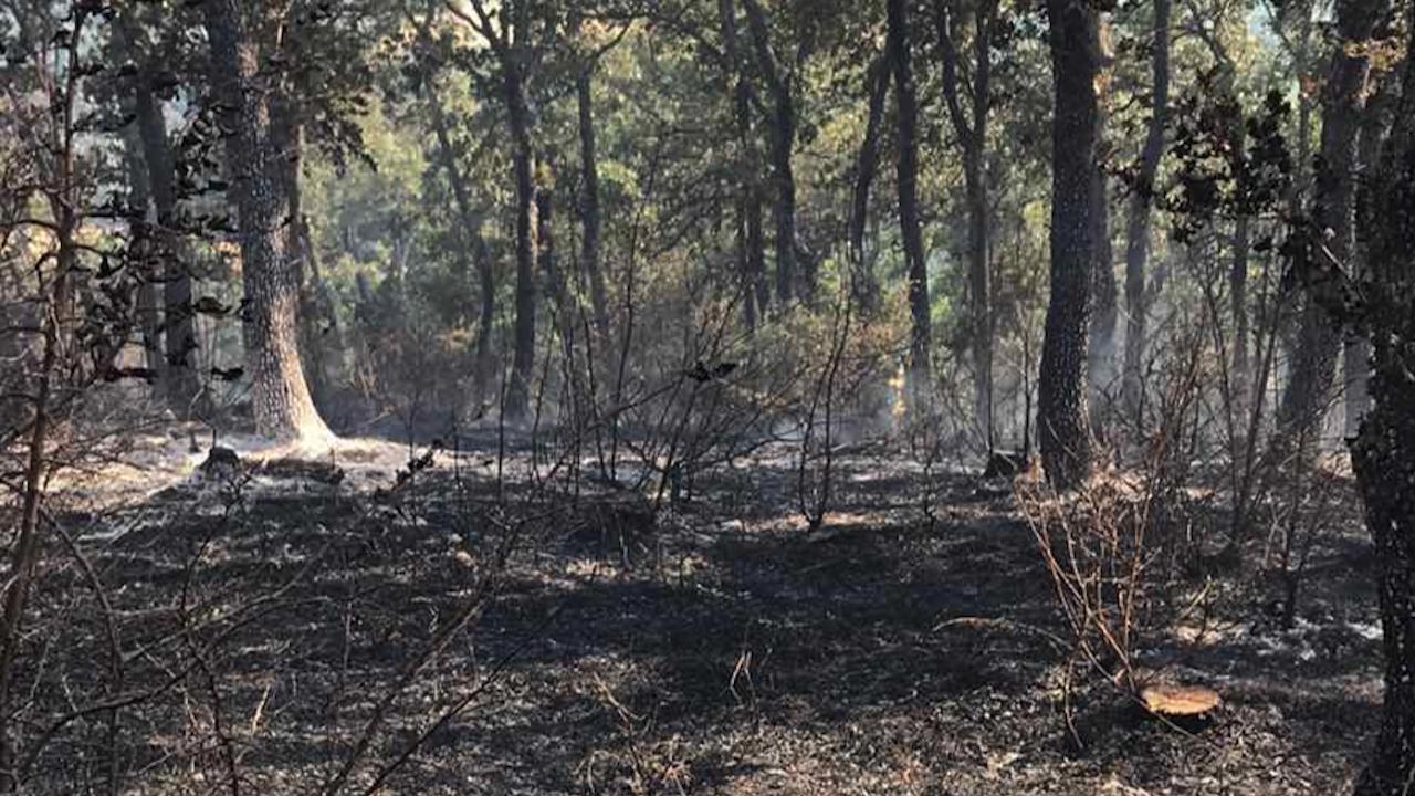 Пожарът край село Свирачи унищожи 500 дка гора