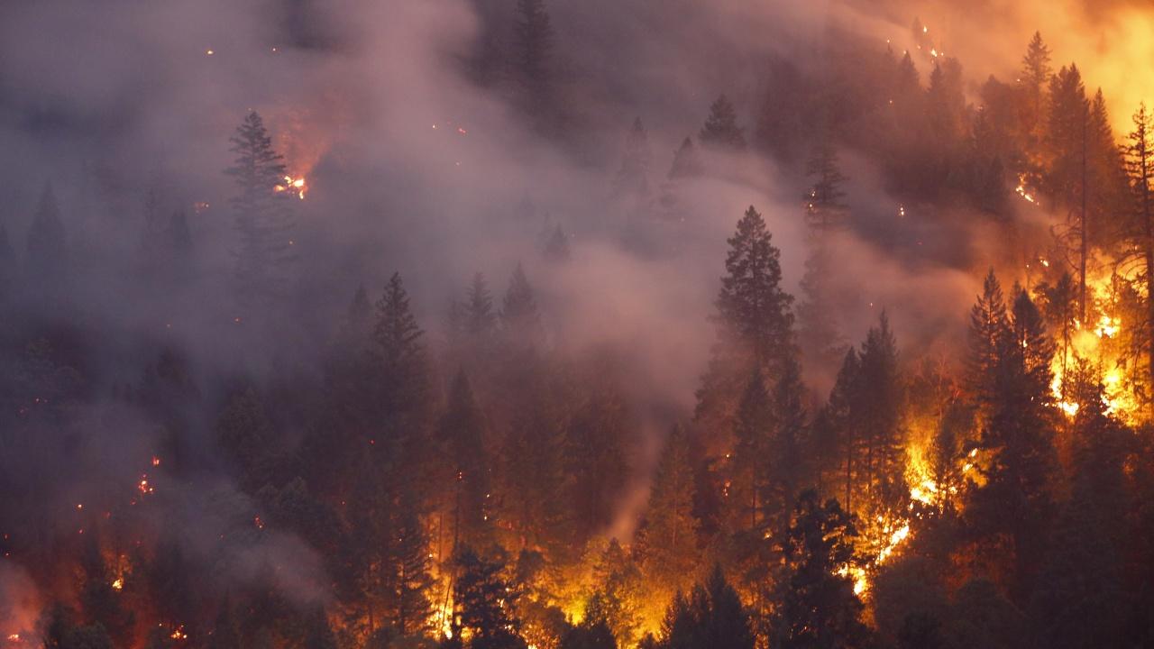 Пожари са унищожили 91 хиляди хектара гори в Турция през последното десетилетие