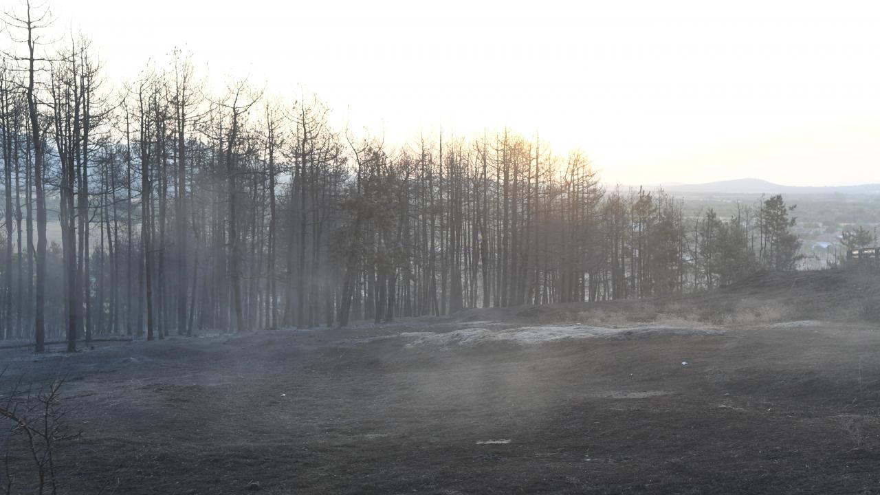Няма установени пожари на земеделски и горски земи на територията на Столична община