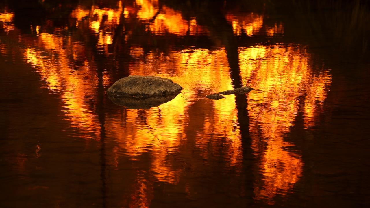 Пожарът Дикси в Калифорния вече е най-големият в САЩ