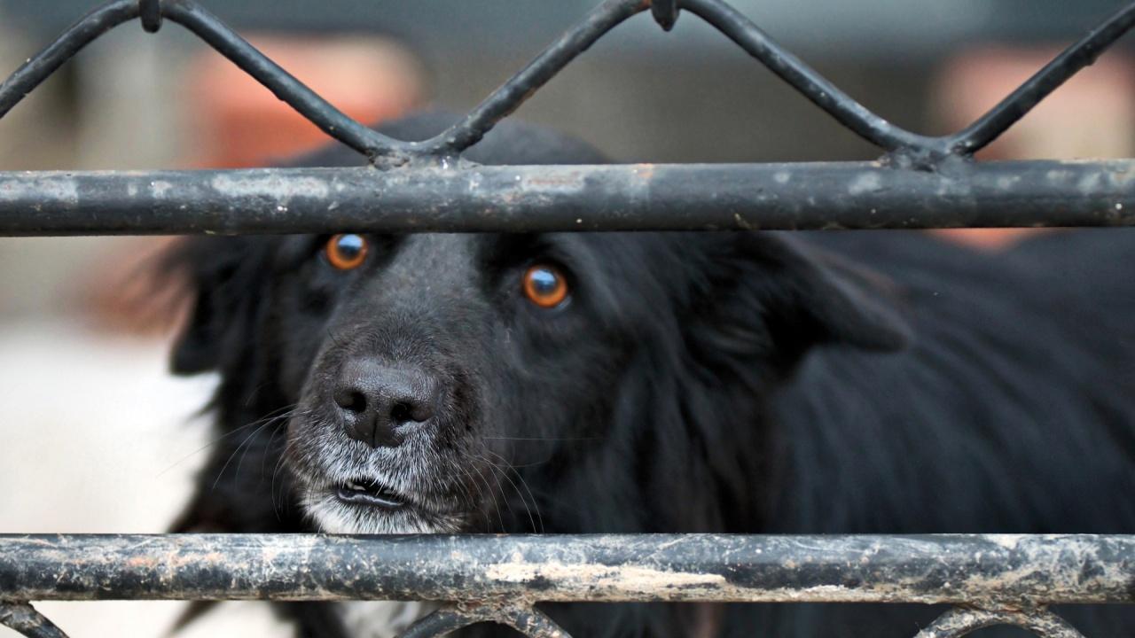 Изоставени кучета, вързани с дни без храна и вода, бяха открити в Ямболско