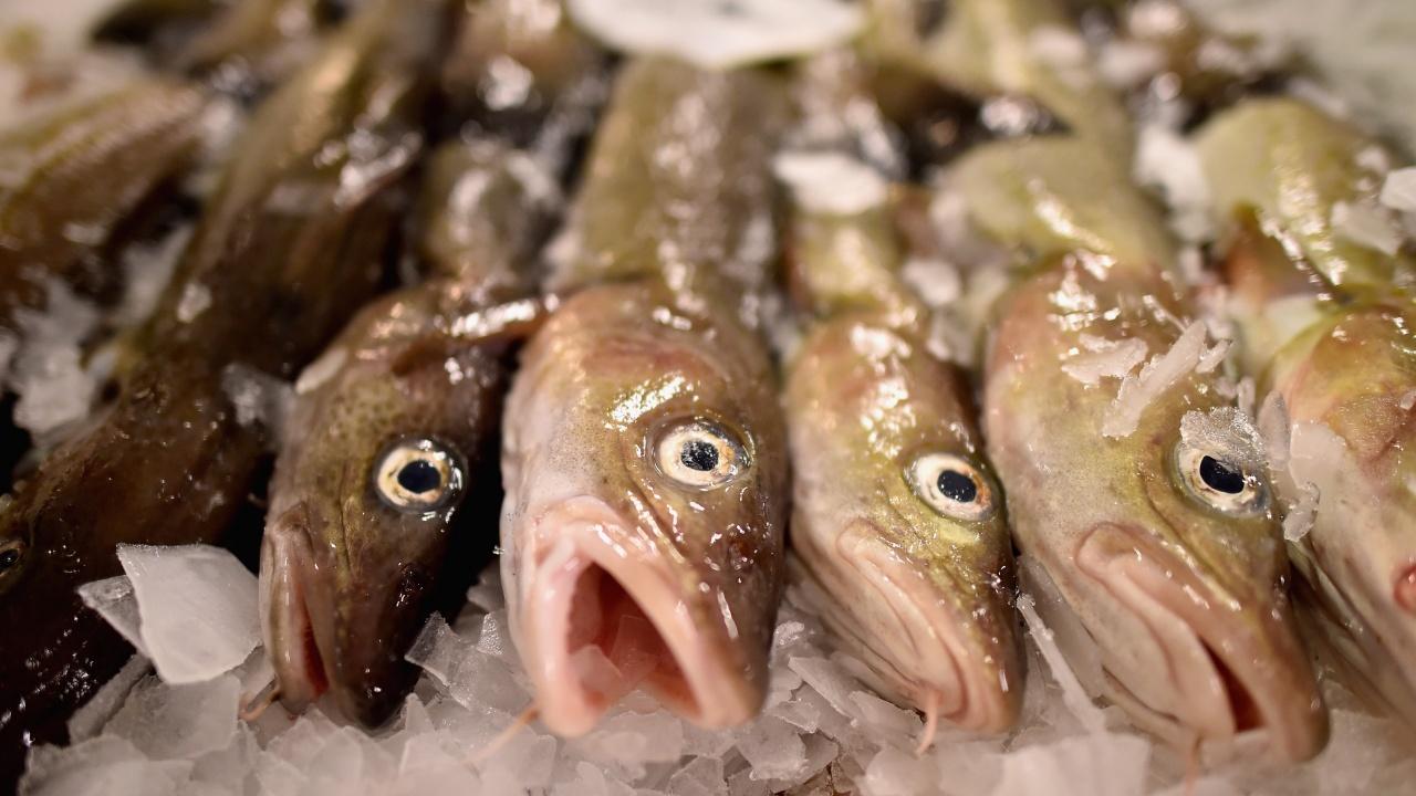 """ДФ """"Земеделие"""" преведе 409 хил. лева безвъзмездната финансова помощ за модернизация на рибопреработвателно предприятие"""