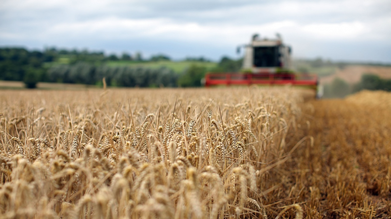Със среден добив над 500 кг/дка е приключила жътвата на пшеницата в Сливенско