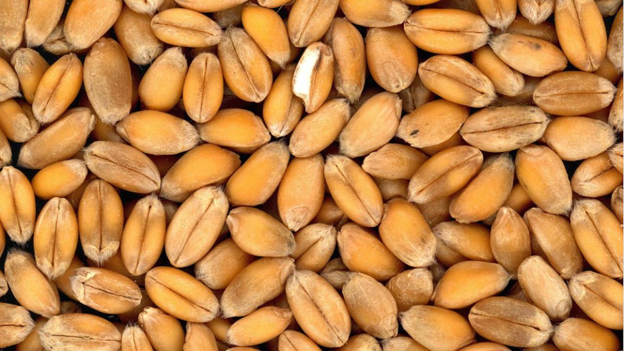 Беларус забрани износа на зърно