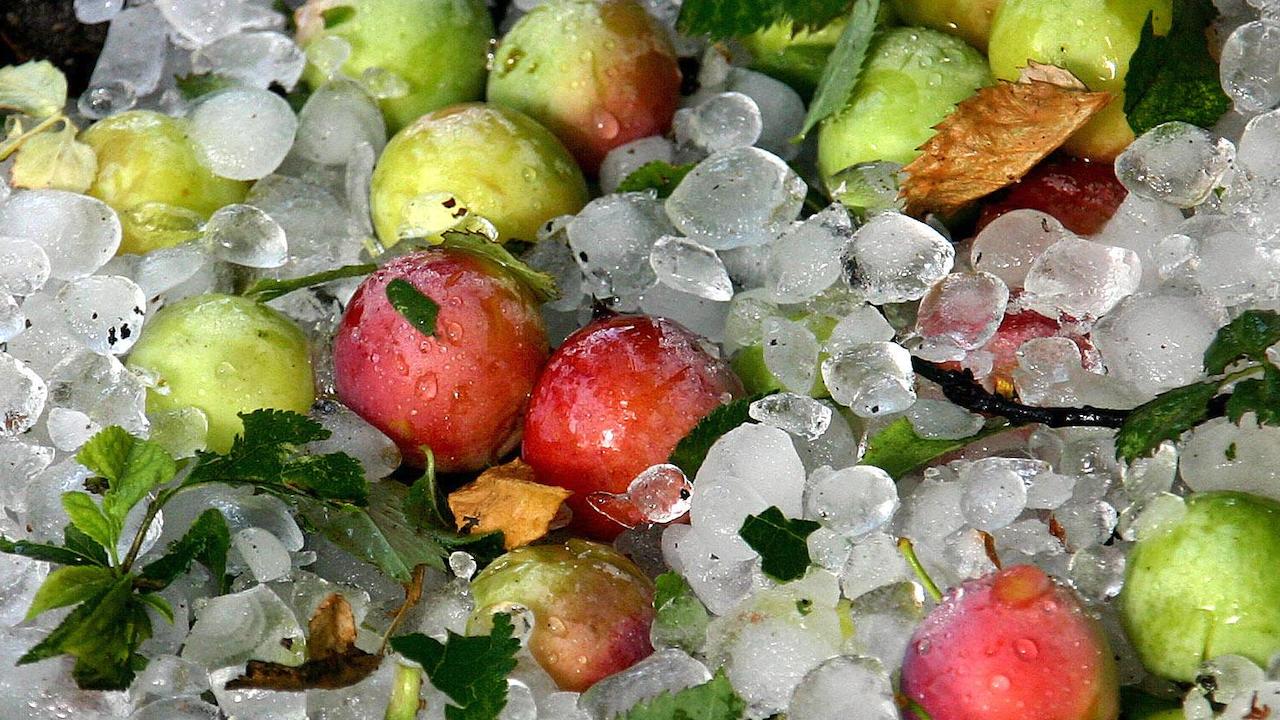 Порой и градушка унищожиха реколтата в троянското село Бели Осъм