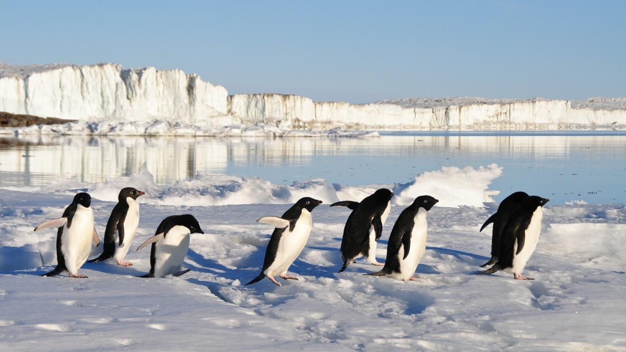 Затоплянето в Арктика е причина за ледената вълна в САЩ