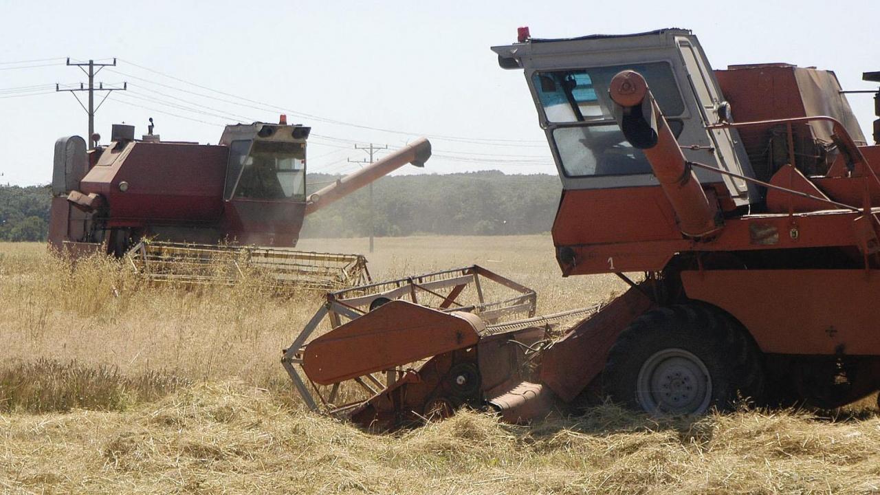Над 7 милиона тона пшеница са ожънати в България през лятото