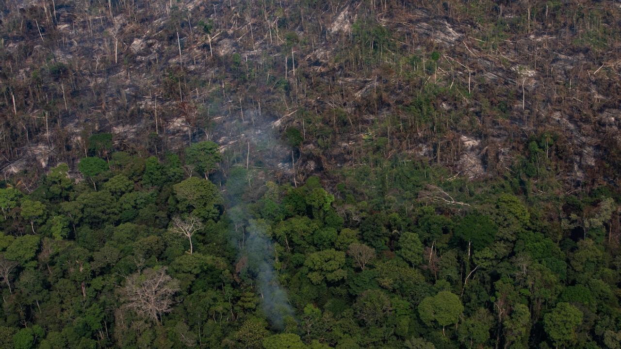 Амазония е изгубила 10 000 квадратни километра гора за една година