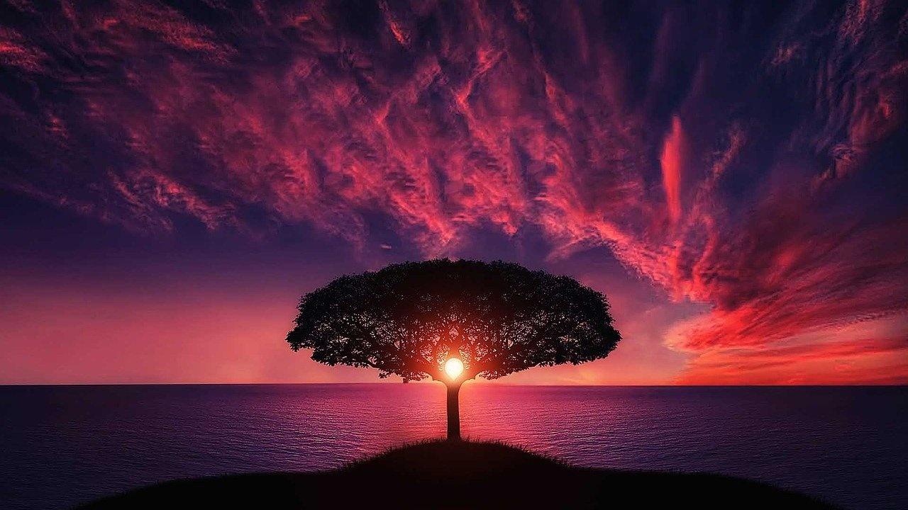 Символ на деня е дървото на познанието