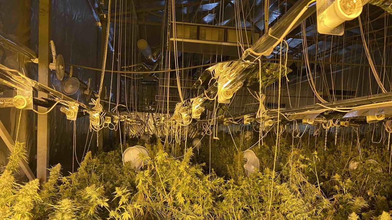 Разбиха модерни оранжерии за марихуана в Софийско