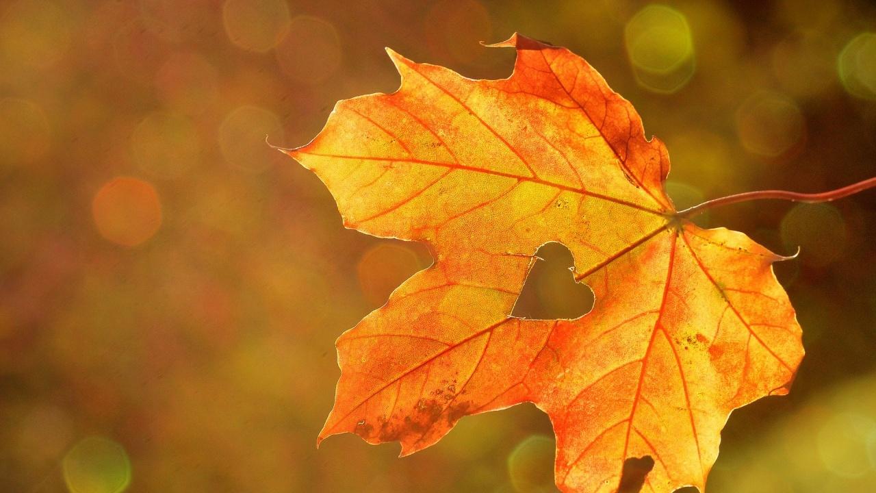 Ето какво ще бъде времето тази есен