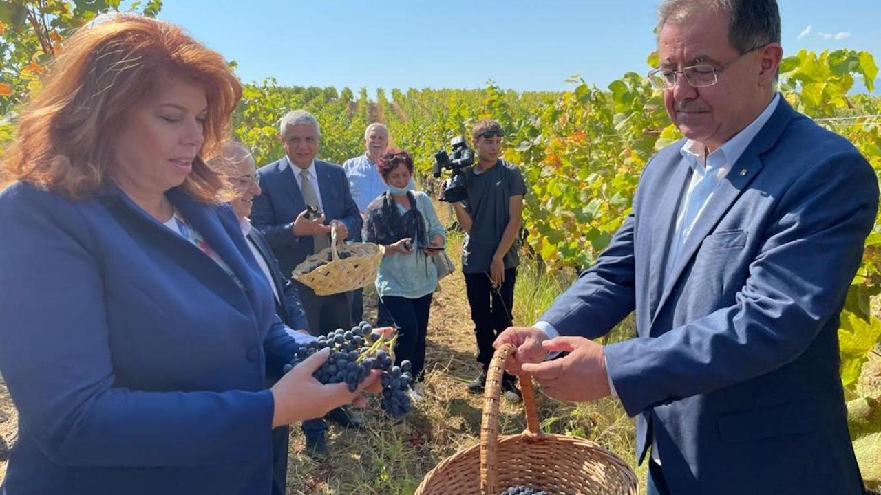 Министър Бозуков: С 20 % по-висок добив от грозде очакваме тази година