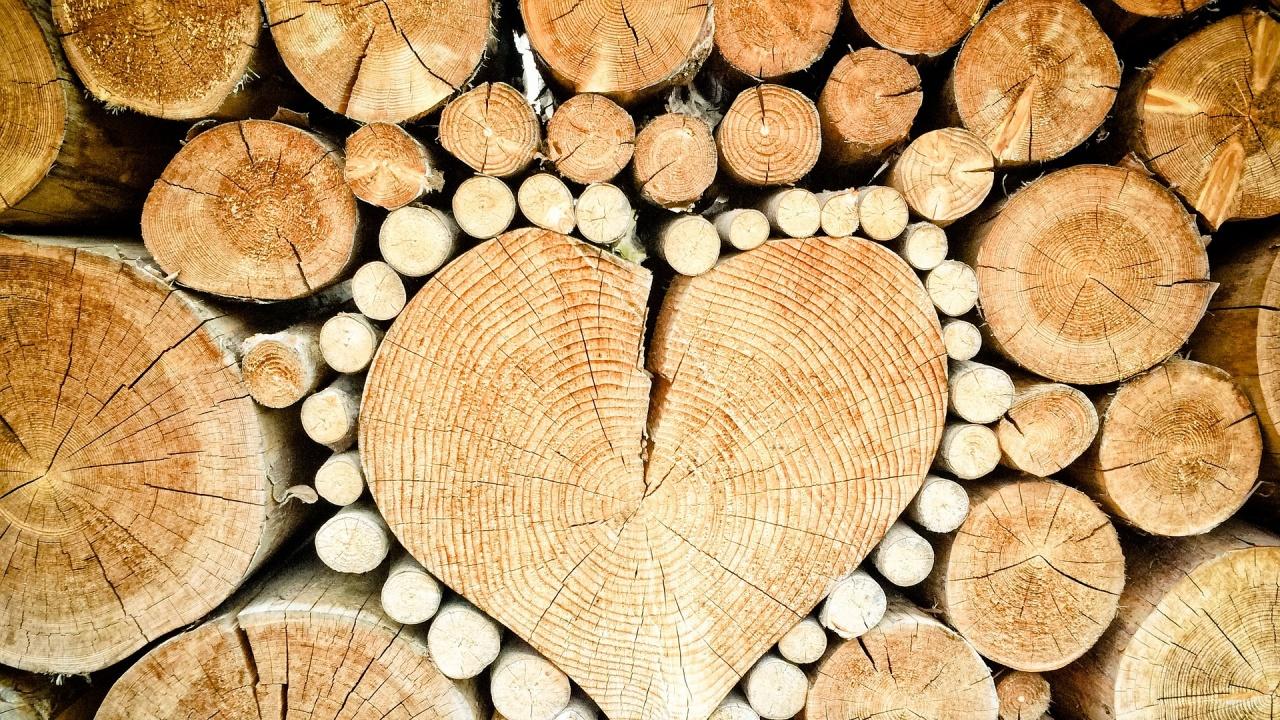Над 1 милион куб. м. дърва за огрев се осигуряват за зимния сезон на населението