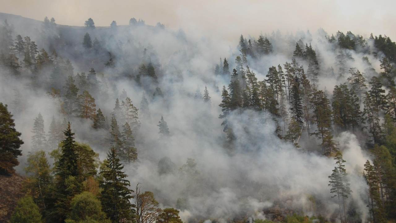"Вертолет ""Кугар"" трети ден участва в гасенето на горския пожар в Рила"