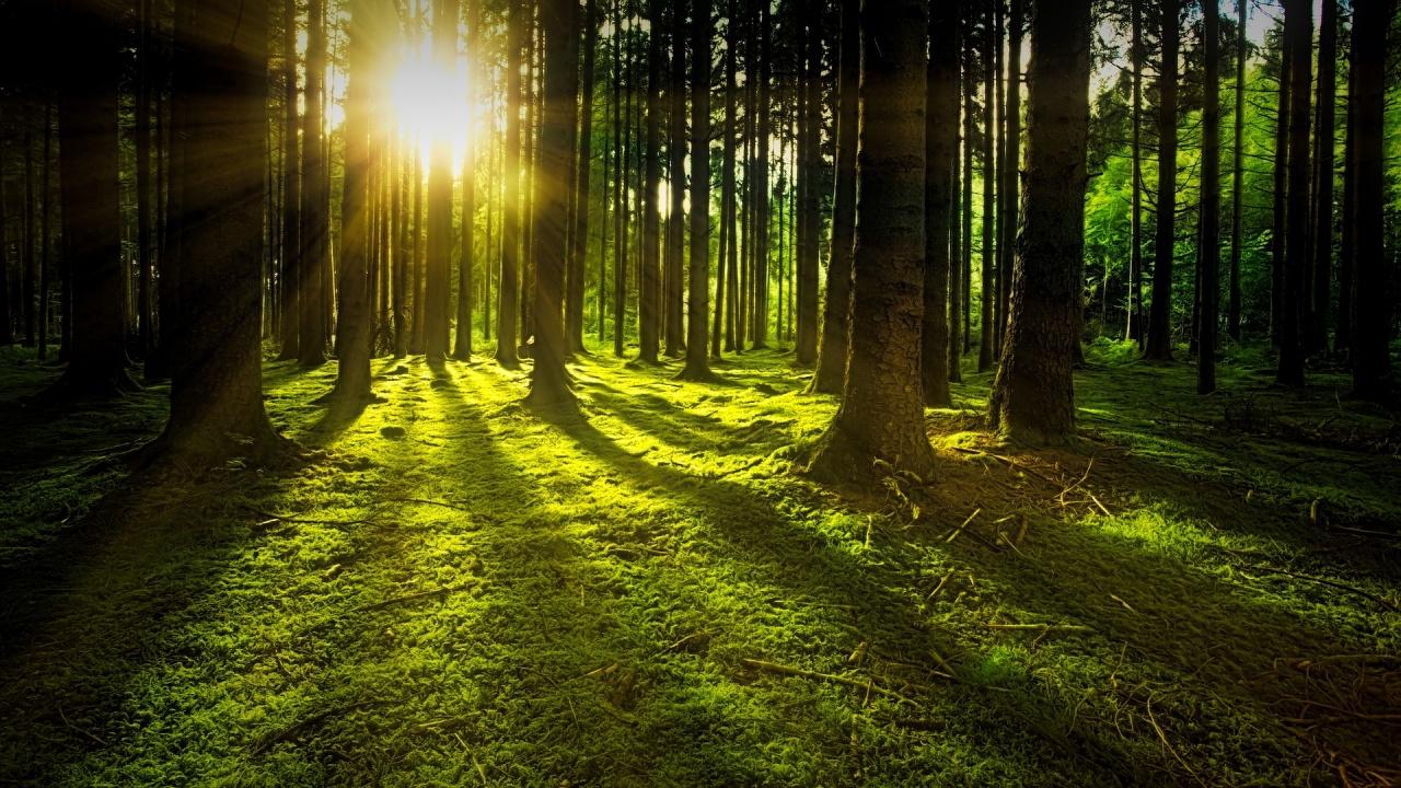 Днес се отбелязва празникът на опазената гора
