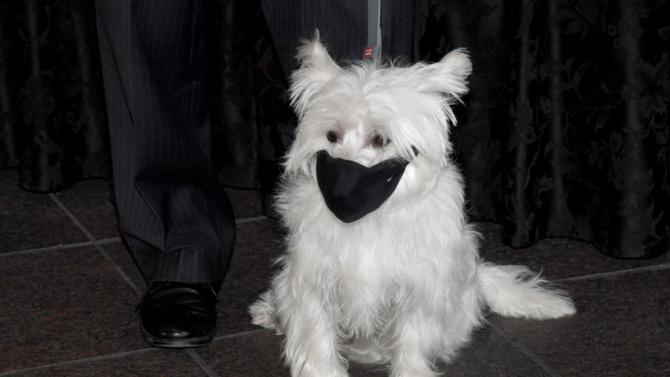 Продажбите на предпазни маски за кучета отчитат рекорд